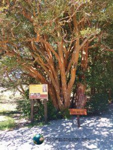 Parque Los Arrayanes, correre in Patagonia
