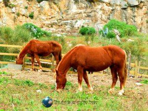 Cavallini fuori dalla grotta, custonaci, correre in sicilia