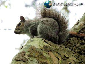 hyde-park-scoiattolo-correre-a-londra