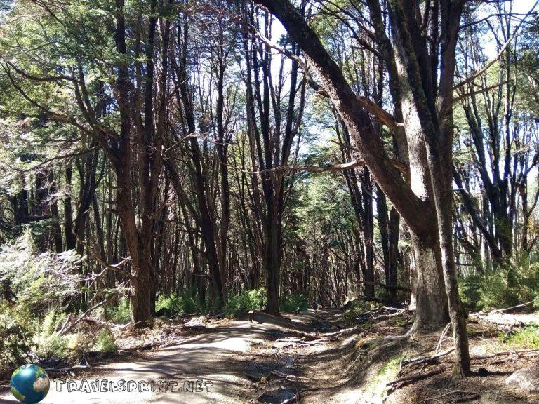 Sentiero per la cascata del rio bonito, correre in patagonia